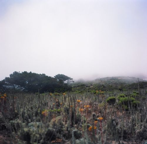 emily perry studios bluff and fog